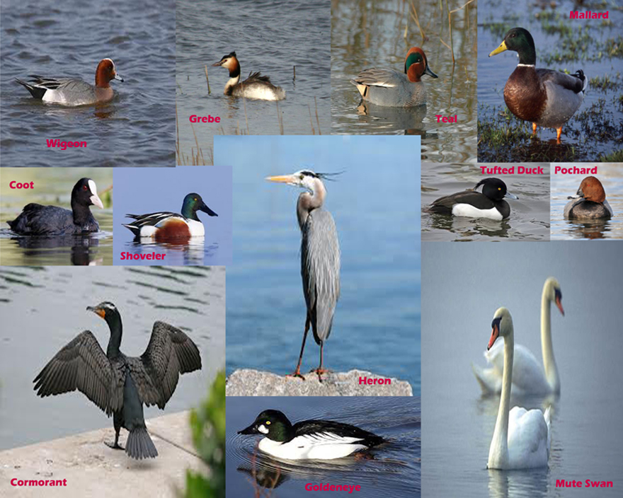 loughrea birds with names